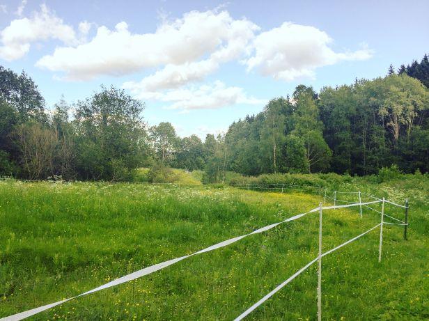 Hestejordene ved Rødtvedt i Lillomarka - Oslomarka - Lillomarka - Fantastiske marka