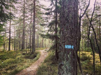 Illustrasjonsbilde på sporløs ferdsel - Oslomarka - Fantastiske marka