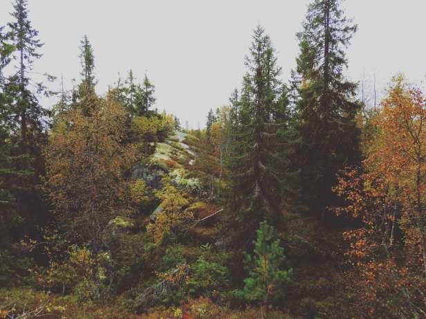 Skogen og stien på Pershusfjellet - Oslomarka - Nordmarka - Fantastiske marka