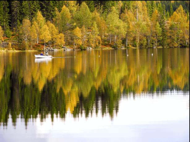 Garn legges ut på Tverssjøen - Oslomarka - Nordmarka - Fantastiske marka