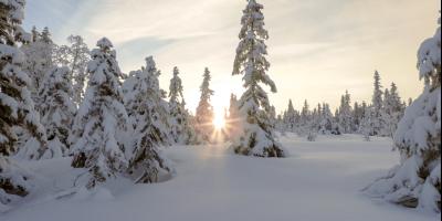 Vinterbilde fra Bislingflaka - Oslomarka - Nordmarka - Fantastiske marka