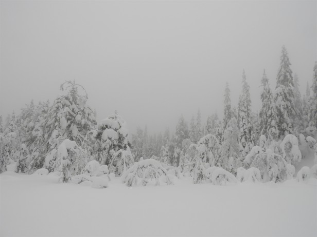 Snø og tåke i vinterskogen - Oslomarka - Nordmarka - Fantastiske marka