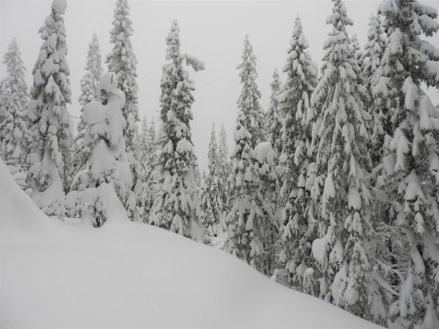 Grantrær tunge av snø - Oslomarka - Nordmarka - Fantastiske marka