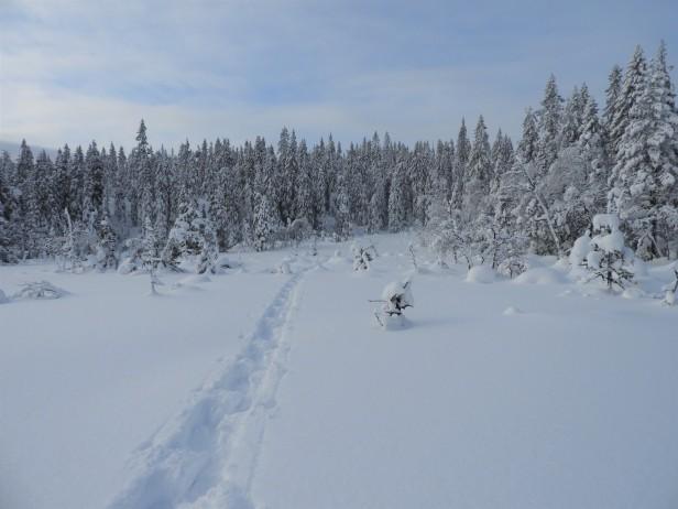 Trugespor over en snødekt myr om vinteren - Oslomarka - Nordmarka - Fantastiske marka