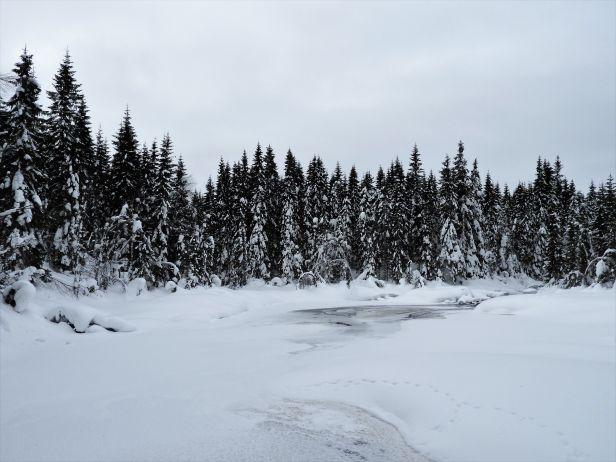 Tett på de gode naturopplevelsene med truger - Oslomarka - Nordmarka - Fantastiske marka