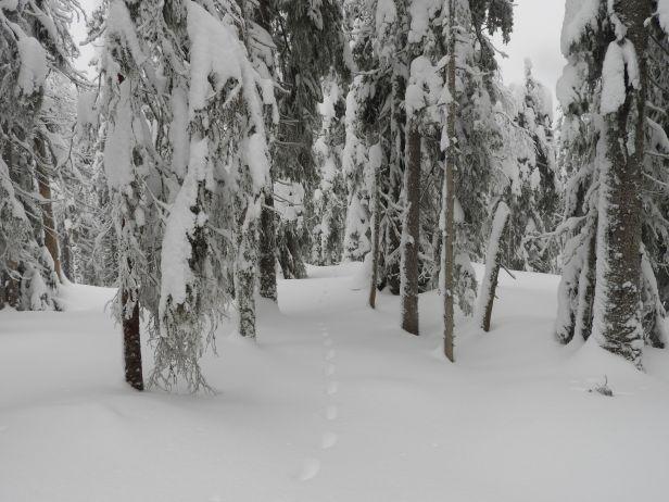 Inn i vinterskogn til steder bare dyr ferdes - Oslomarka - Nordmarka - Fantastiske marka