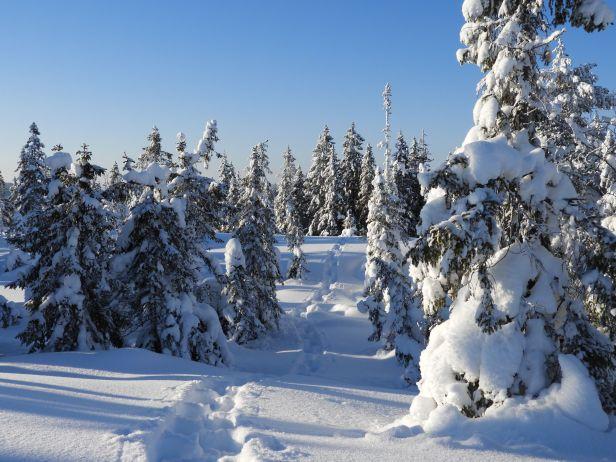 Trugespor i den urørte vinterskogen - Oslomarka - Nordmarka - Fantastiske marka