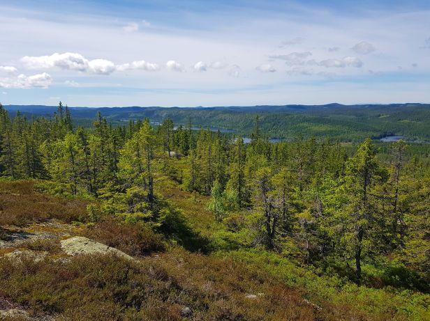 Utsikt fra Kollern mot Pershusfjellet - Oslomarka - Nordmarka - Fantastiske marka