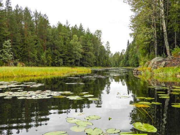 Flytemyr og vannliljer i Åmotdammen - Oslomarka - Østmarka - Fantastiske marka