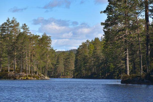 Utsikt nordover i Kirkebygjermenningen mellom odder og viker - Oslomarka - Romeriksåsene - Fantastiske marka