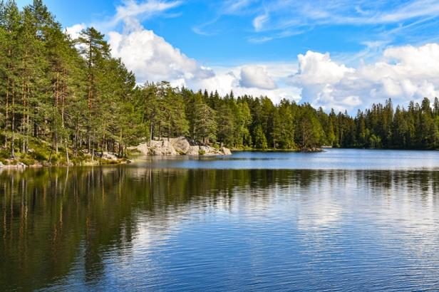 Skog og sva ved breddene av Ramstadsjøen - Oslomarka - Østmarka - Fantastiske marka