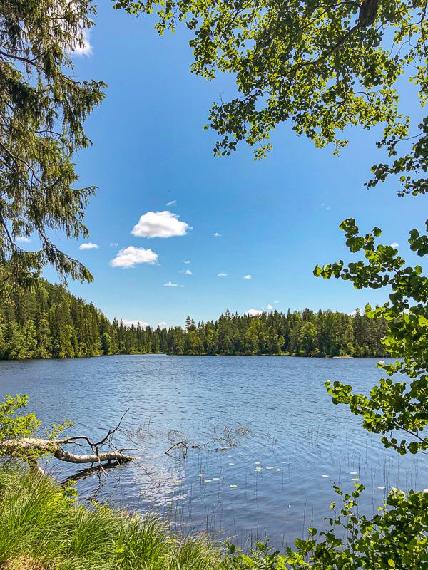 Vakkert på den nordlige leirplassen ved Steinsjøen - Oslomarka - Østmarka - Fantastiske marka