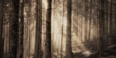 Lyset trenger gjennom ungskogen - Oslomarka - Fantastiske marka
