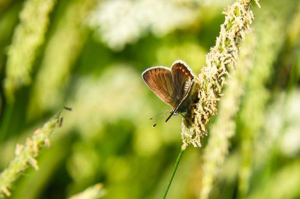 En liten sommerfugl - Oslomarka - Nordmarka - Fantastiske marka