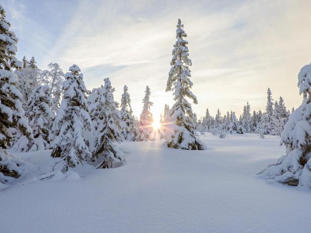 Snø på trærne - Oslomarka - Nordmarka - Fantastiske marka