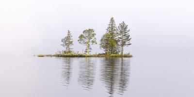 Trær i tåka på Søndre Heggeligvann - Oslomarka - Krokskogen - Fantastiske marka